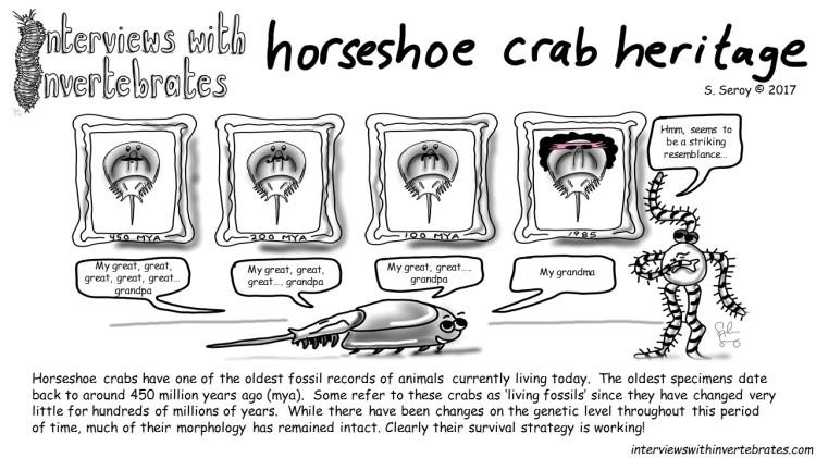 5 - horseshoe crab heritage