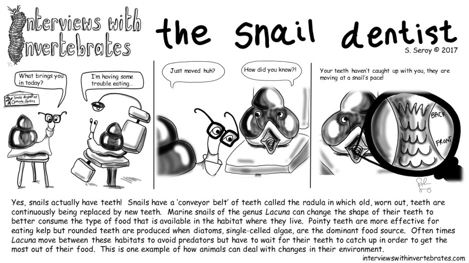 the snail dentist4