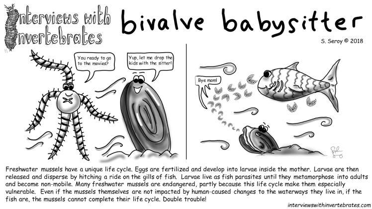 bivalve babysitter