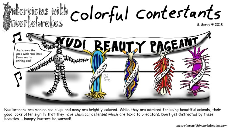 colorful_contestants