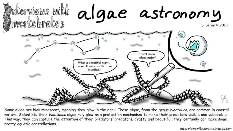 algae astromony2