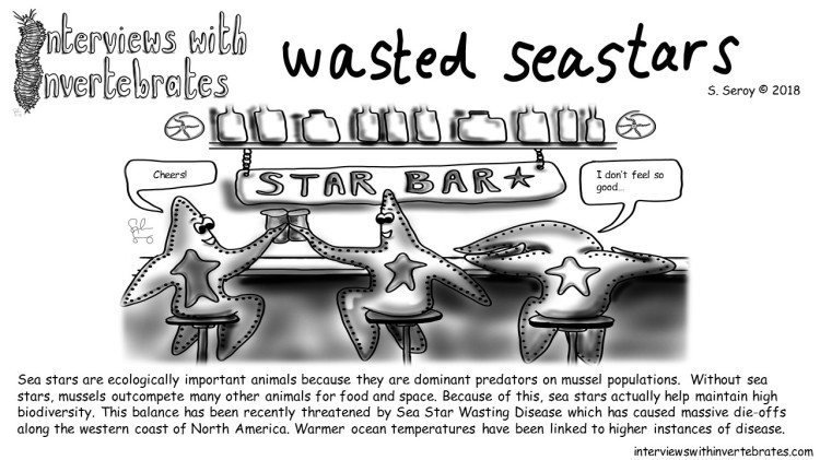 wasted seastars3