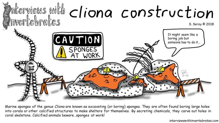 cliona_construction