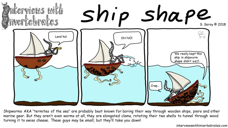 ship_shape