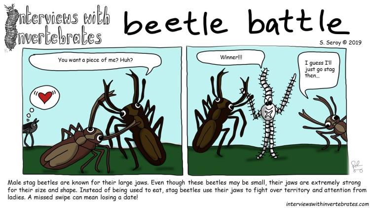 beetle_battle
