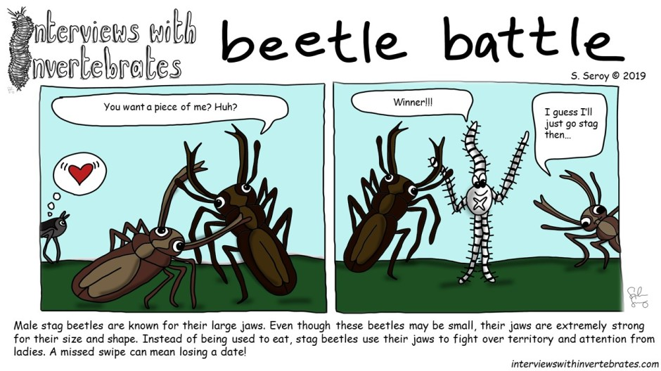 beetle_battle