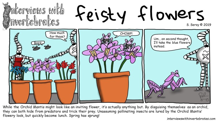feisty_flowers