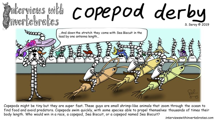copepod derby
