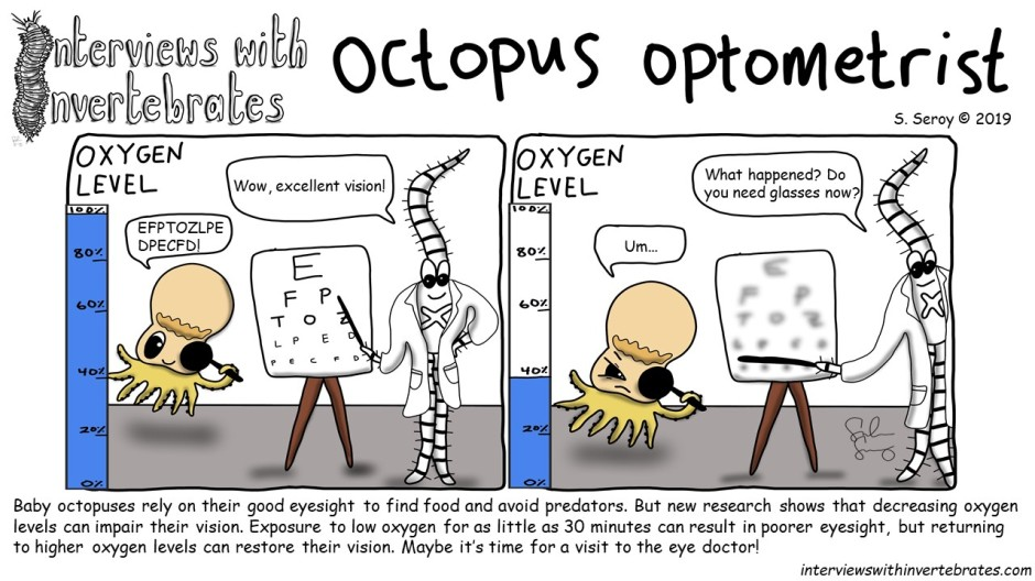 octopus optometrist.jpg