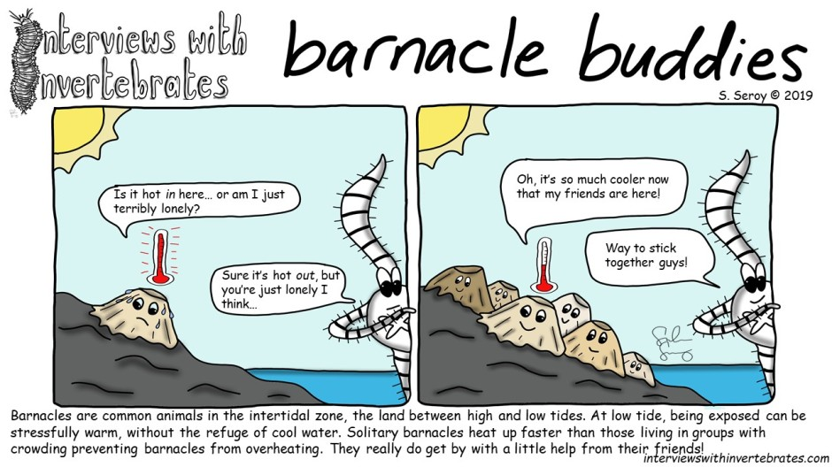 barnacle buddies final