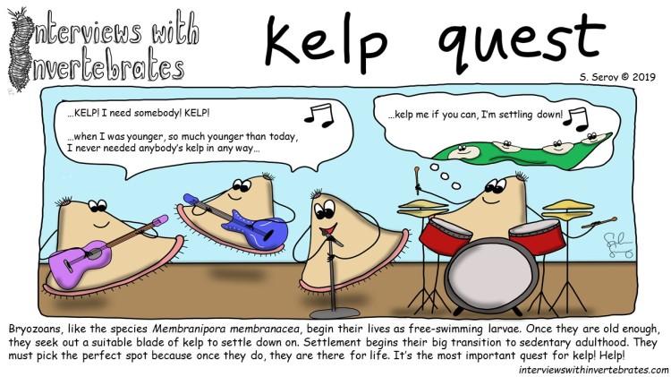 kelp quest
