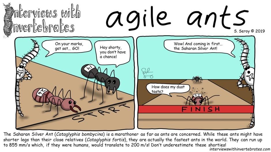 agile_ants