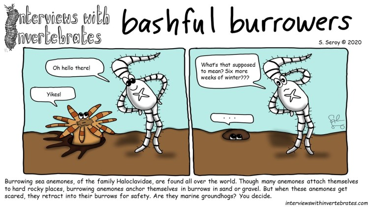 bashful_burrowers