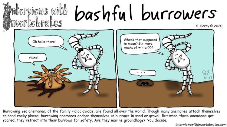 bashful_burrowers