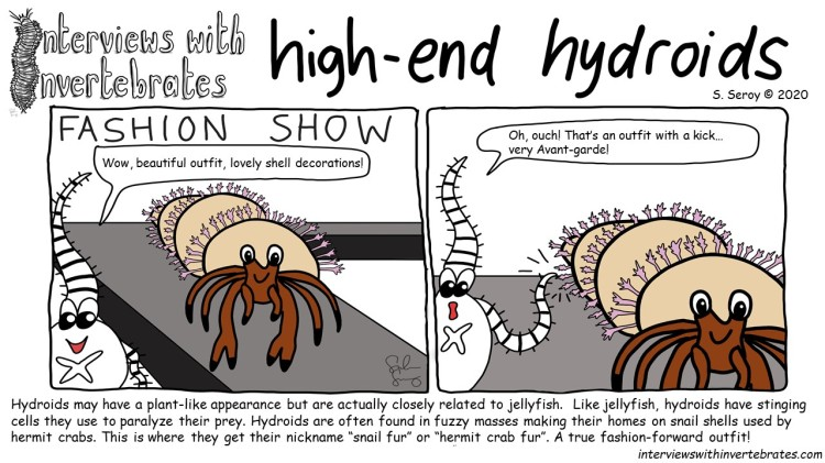 high-end_hydroid