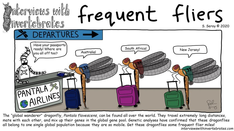 frequent_fliers